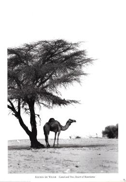 Camel and Tree, Desert of Mauritania by Alexis De Vilar