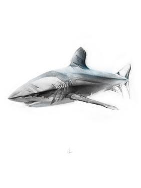 Shark 1 by Alexis Marcou