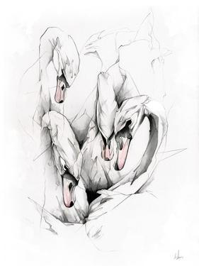 Swans by Alexis Marcou