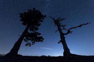 Italy, Calabria, Loricati Pines on the Pollino at Night by Alfonso Morabito