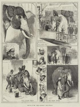 Arrival of the White Elephant from Burmah by Alfred Courbould