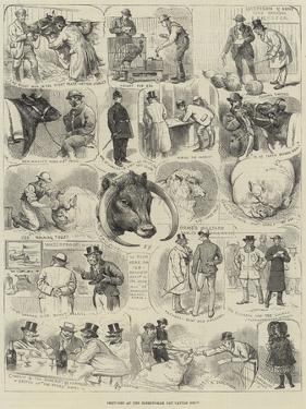 Sketches at the Birmingham Fat Cattle Show by Alfred Courbould