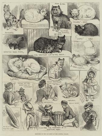 Sketches of the Cat Show at the Crystal Palace