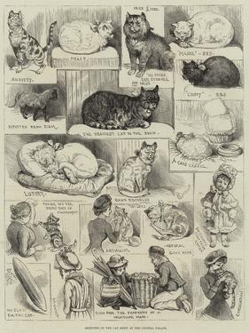 Sketches of the Cat Show at the Crystal Palace by Alfred Courbould