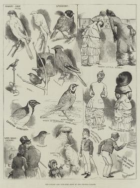 The Canary and Cage-Bird Show at the Crystal Palace by Alfred Courbould