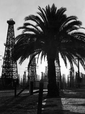 Billowing Palm Tree Gracing the Stark Structures of Towering Oil Rigs by Alfred Eisenstaedt