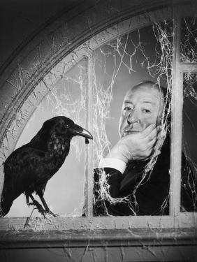Alfred Hitchcock, photo pour la sortie du fim Les Oiseaux, 1963 (b/w photo)