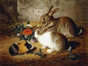Escaped: Two Rabbits and Guinea Pig by Alfred R. Barber