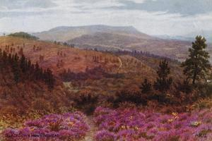 Blackdown from Hindhead by Alfred Robert Quinton