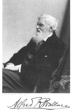 Alfred Russell Wallace, Welsh-Born British Naturalist, C1900