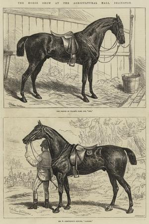 The Horse Show at the Agricultural Hall, Islington