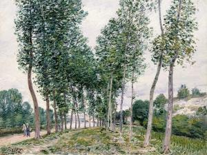 Alley of Poplars Along the Loing, 1892 by Alfred Sisley