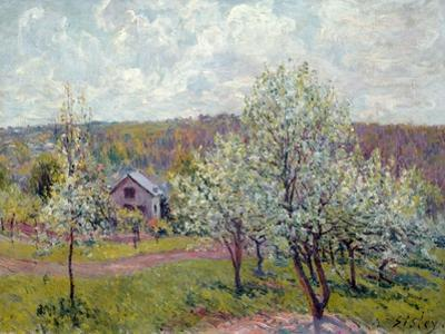Spring in the Environs of Paris, Apple Blossom, 1879 by Alfred Sisley