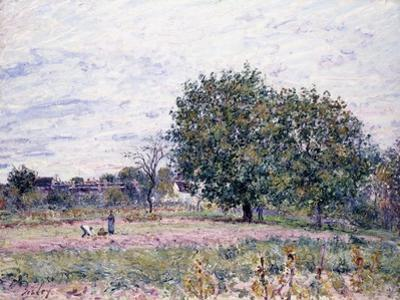 Walnut Trees, Effect of the Setting Sun - First Day of October, 1882 by Alfred Sisley