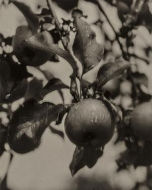 Apple and Drops of Rain, Lake George, 1922 by Alfred Stieglitz