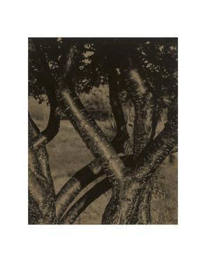 Dancing Trees, 1922 by Alfred Stieglitz