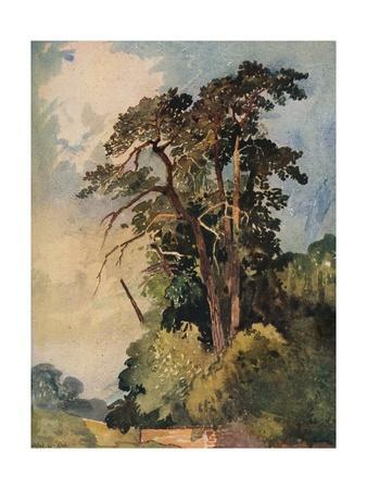 'Study of Trees', c1880