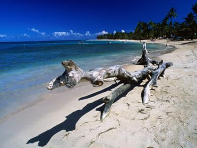 A Large Piece of Driftwood on the Idyllic Tropical Beach at Las Terrenas,Dominican Republic
