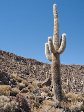 Cactus at Isla Pescado by Alfredo Maiquez