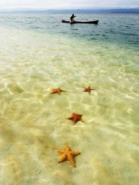 Sea Stars in Tropical Water at Star Beach by Alfredo Maiquez