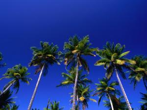 Tropical Trees in Guanica, Guanica, Puerto Rico by Alfredo Maiquez