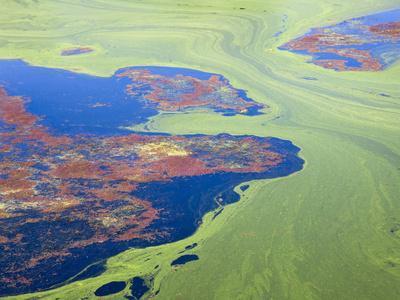 https://imgc.allpostersimages.com/img/posters/algae-on-the-water-indhar-lake-udaipur-rajasthan-india_u-L-PHATNH0.jpg?p=0