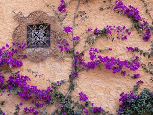 Ornamental Window, San Miguel De Allende, Mexico by Alice Garland