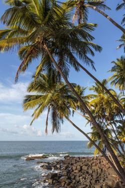 French Guiana, Ile St. Joseph. View of Palm Trees and Rocks on Beach by Alida Latham