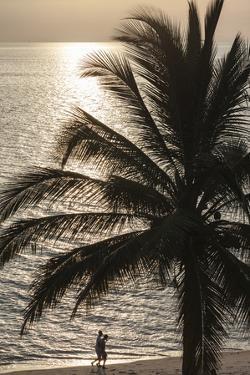 Palm Tree and Men at Sunset, Stone Town, Zanzibar, Tanzania by Alida Latham