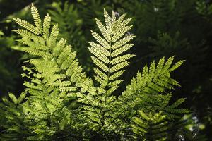 Trinidad, Arima Valley, Asa Wright Center. Foliage in Rainforest by Alida Latham