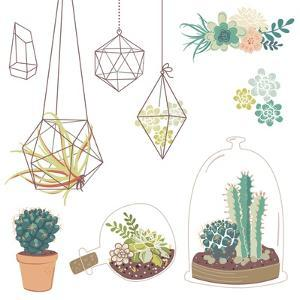 Vector Set with Succulents, Flowers and Glass Terrariums by Alisa Foytik