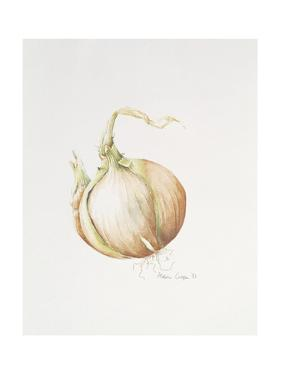 Onion Study, 1993 by Alison Cooper