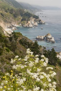California, Big Sur, View of Pacific Ocean Coastline with Cow Parsley by Alison Jones