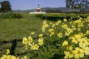 California, San Simeon, Yellow Wood Sorrel in Front of a School House by Alison Jones