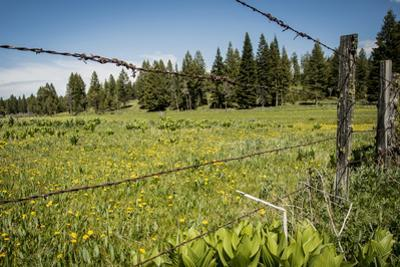 Idaho, Camas Prairie, Field and Barbed Wire Fence by Alison Jones
