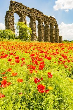 Italy, Rome. Parco Regionale dell'Appia, Antica, Park of the Aqueducts by Alison Jones