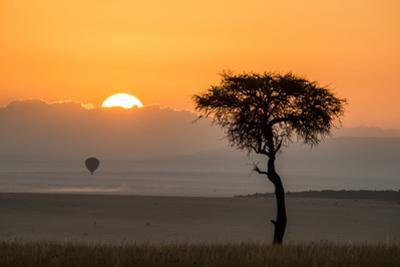 Kenya, Maasai Mara, Sunrise Behind Balanites Tree and Hot Air Balloon by Alison Jones