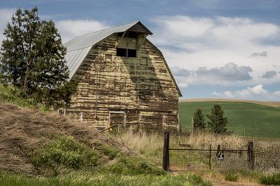 Washington State, Palouse, Whitman County by Alison Jones