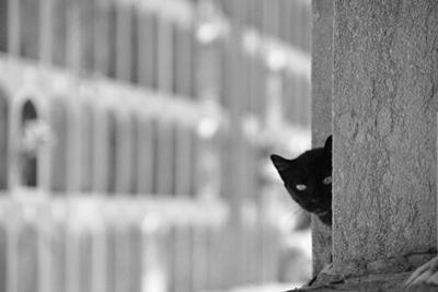 Cat in Cemetery by All copyrights reserved by Harris Hui