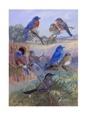 A Painting of Three Species of Bluebird and a Catbird by Allan Brooks