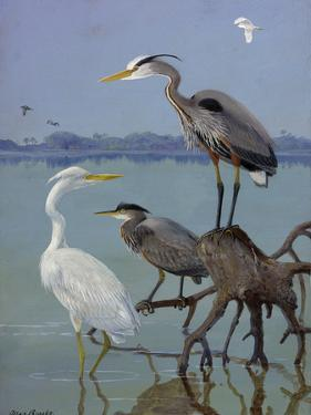 Great White and Blue Herons Perch on a Tree Trunk in Shallow Waters by Allan Brooks