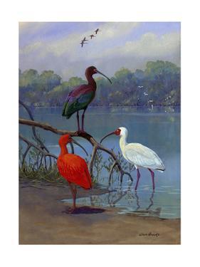 Various Ibis Perch Lakeside by Allan Brooks