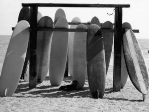 Dog Seeking Shade under Rack of Surfboards at San Onofre State Beach by Allan Grant