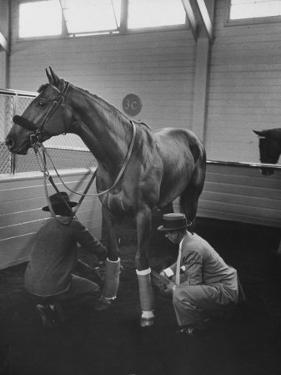 Silky Sullivan Being Prepared for the Santa Anita Derby by Allan Grant