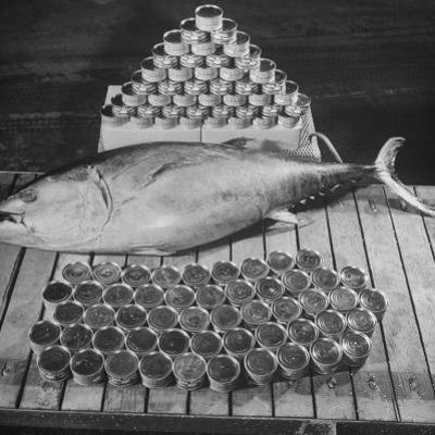 Tuna and Cans of Tuna