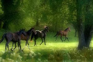 Running Horses by Allan Wallberg