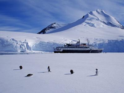 Antarctic Peninsula, Port Lockroy, Gentoo Penguins and Cruise Ship Clipper Adventurer, Antarctica