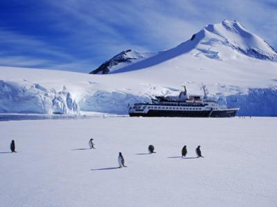 Wiencke Island, Port Lockroy, Gentoo Penguins on Sea-Ice with Cruise Ship Beyond, Antarctica