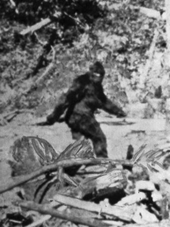 https://imgc.allpostersimages.com/img/posters/alleged-photo-of-bigfoot_u-L-PZLYJN0.jpg?artPerspective=n