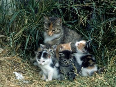 Outdoor Portrait of Cat and Kittens